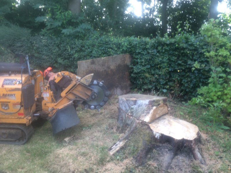 Experts in Tree Removal
