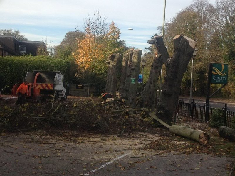 Appreciating and Helping UK Trees